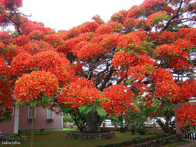 Ngỡ như lạc vào xứ thần tiên với những loài cây đẹp nhất hành tinh - Ảnh 14.