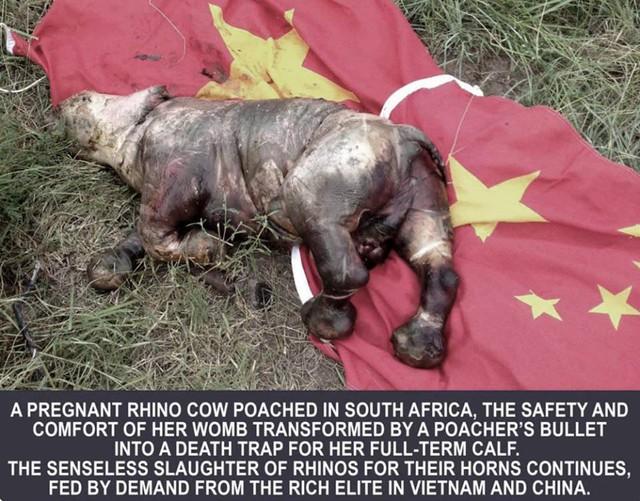 MC Phan Anh xuống tóc, kêu gọi bảo vệ động vật hoang dã - Ảnh 2.