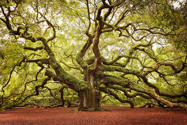 Ngỡ như lạc vào xứ thần tiên với những loài cây đẹp nhất hành tinh - Ảnh 15.