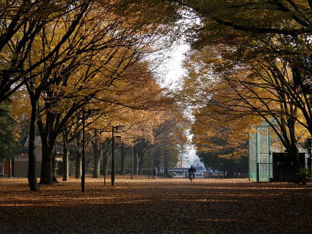 Cảnh sắc mùa thu với lá vàng, lá đỏ đẹp như tranh vẽ ở Tokyo - Ảnh 6.