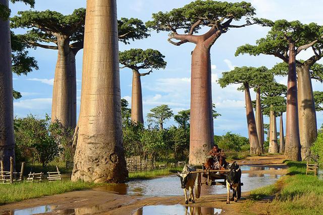 Ngỡ như lạc vào xứ thần tiên với những loài cây đẹp nhất hành tinh - Ảnh 16.