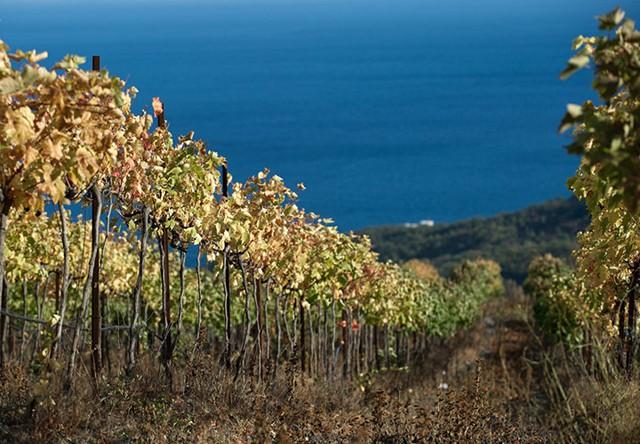 Ngắm khung cảnh mùa Thu đẹp như cổ tích ở Crimea - Ảnh 2.