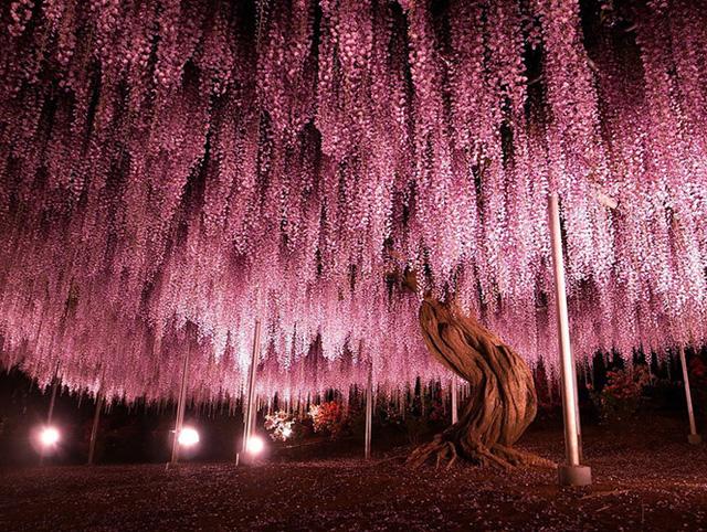 Ngỡ như lạc vào xứ thần tiên với những loài cây đẹp nhất hành tinh - Ảnh 2.