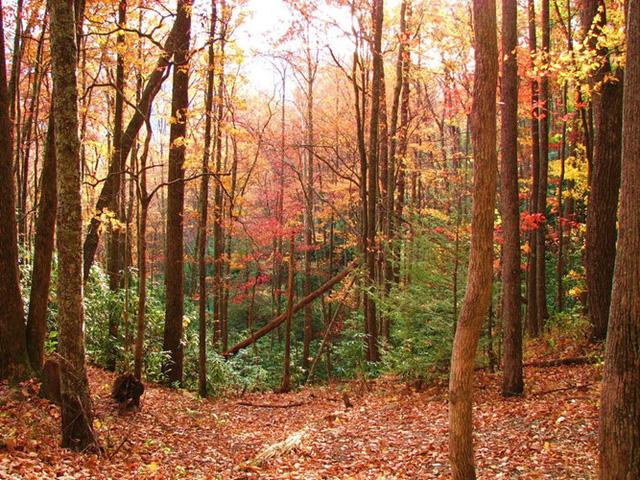 Những vùng đất có mùa thu đẹp nhất nước Mỹ - Ảnh 2.