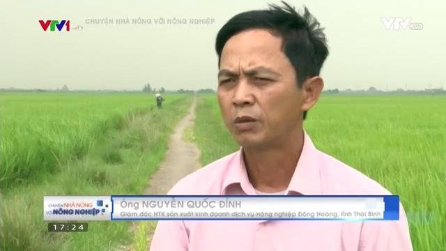 Thái Bình phát huy hiệu quả chuỗi liên kết trong sản xuất nông nghiệp - Ảnh 1.