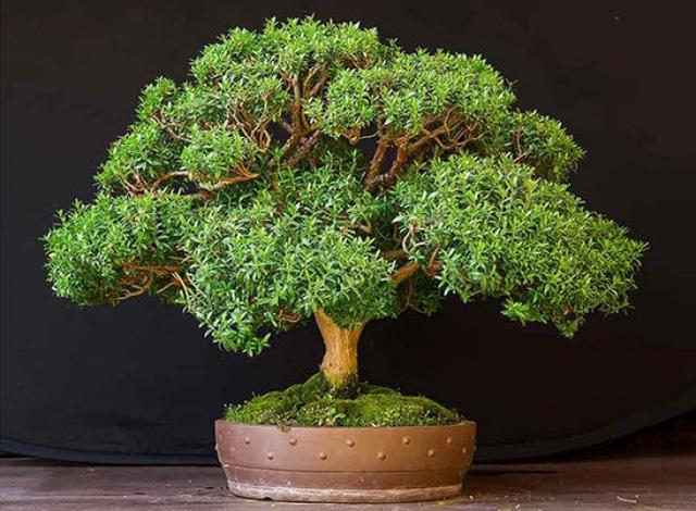 10 loại cây cảnh giúp cho cho không khí nhà bạn hoàn hảo - Ảnh 3.