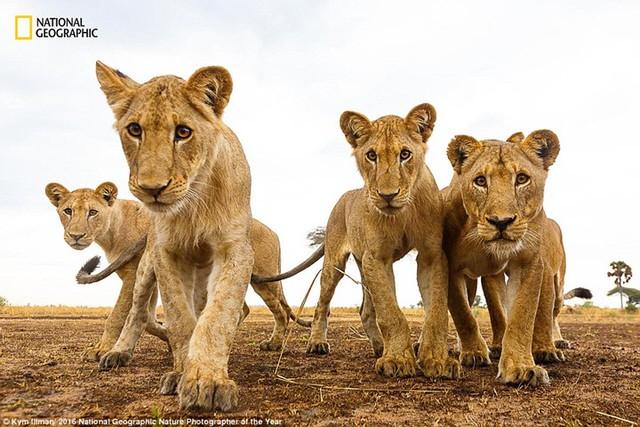 Thiên nhiên hoang dã đẹp mê hoặc trong ảnh của National Geographic - Ảnh 8.