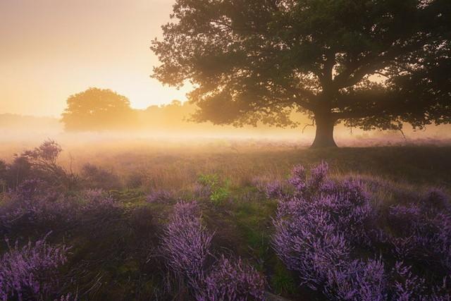 Đắm mình trong buổi sáng mùa Thu đẹp thần tiên ở Hà Lan - Ảnh 10.