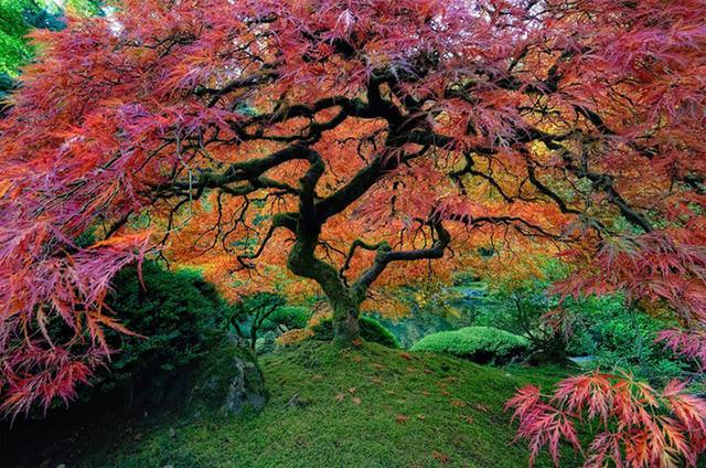 Ngỡ như lạc vào xứ thần tiên với những loài cây đẹp nhất hành tinh - Ảnh 3.