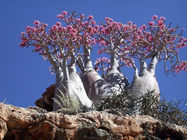 Khám phá Socotra - Hòn đảo được ví như hành tinh khác trên Trái đất - Ảnh 3.