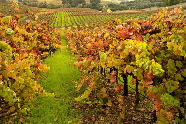 Những vùng đất có mùa thu đẹp nhất nước Mỹ - Ảnh 3.
