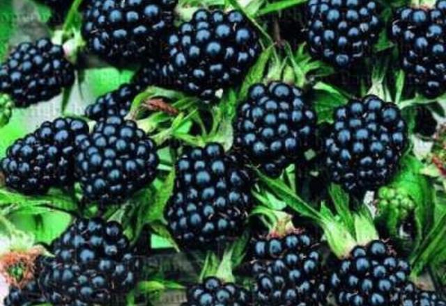 Các thực phẩm giúp chống ung thư hàng đầu - Ảnh 2.
