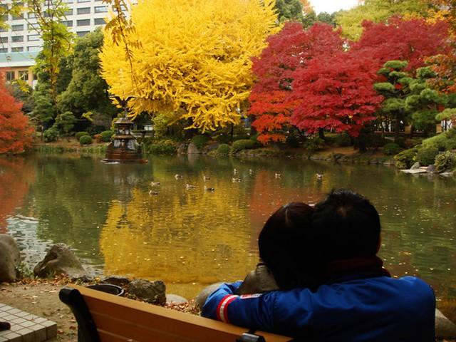 Cảnh sắc mùa thu với lá vàng, lá đỏ đẹp như tranh vẽ ở Tokyo - Ảnh 9.