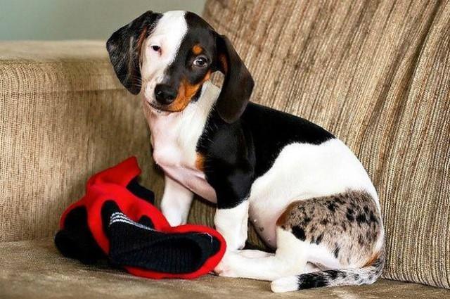 Ngắm những chú chó có bộ lông đặc biệt nhất thế giới - Ảnh 9.