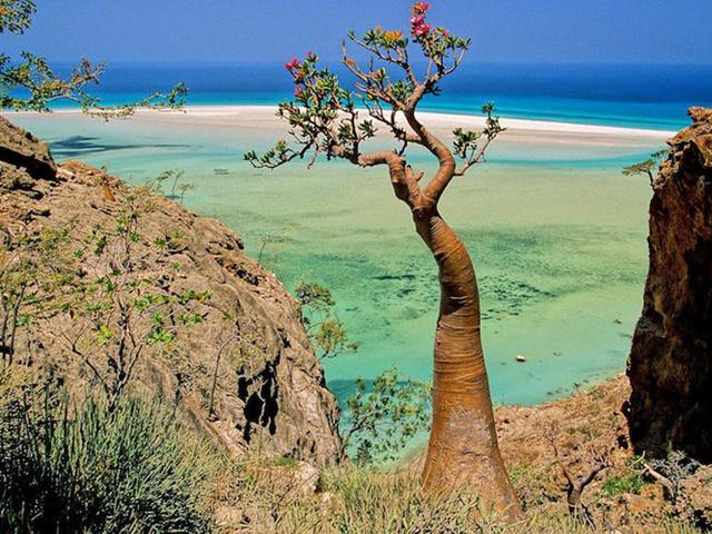 Khám phá Socotra - Hòn đảo được ví như hành tinh khác trên Trái đất - Ảnh 4.