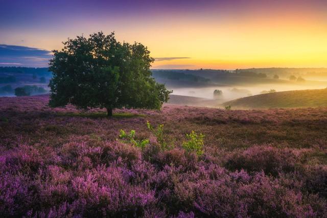 Đắm mình trong buổi sáng mùa Thu đẹp thần tiên ở Hà Lan - Ảnh 4.