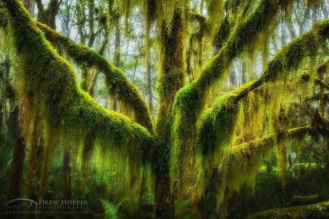 Ngỡ như lạc vào xứ thần tiên với những loài cây đẹp nhất hành tinh - Ảnh 5.