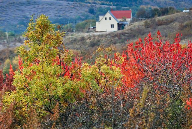 Ngắm khung cảnh mùa Thu đẹp như cổ tích ở Crimea - Ảnh 5.
