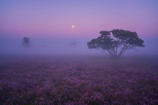 Đắm mình trong buổi sáng mùa Thu đẹp thần tiên ở Hà Lan - Ảnh 5.