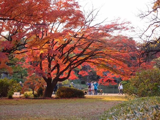 Cảnh sắc mùa thu với lá vàng, lá đỏ đẹp như tranh vẽ ở Tokyo - Ảnh 11.