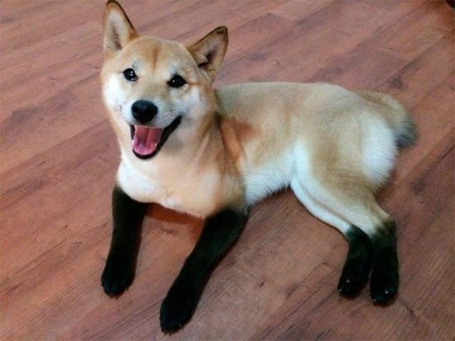 Ngắm những chú chó có bộ lông đặc biệt nhất thế giới - Ảnh 11.