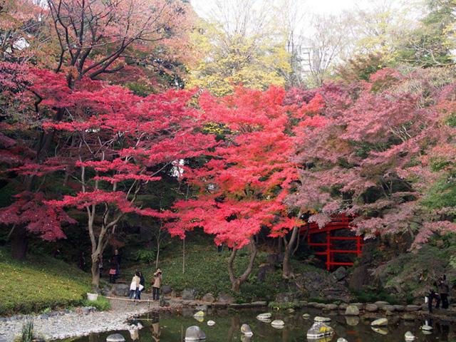Cảnh sắc mùa thu với lá vàng, lá đỏ đẹp như tranh vẽ ở Tokyo - Ảnh 12.