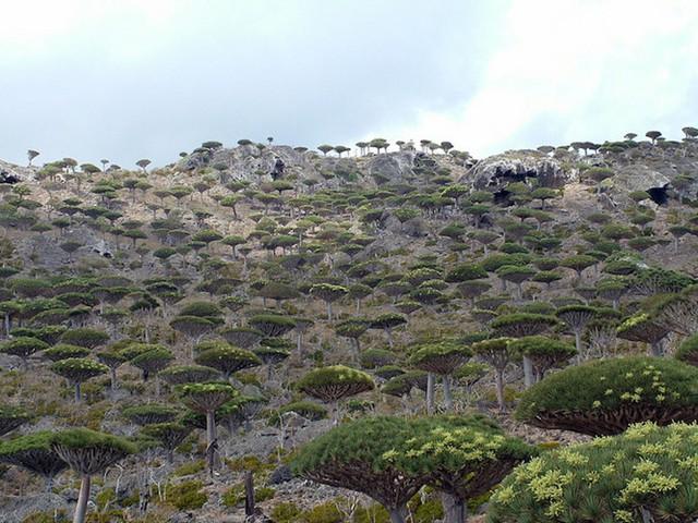 Khám phá Socotra - Hòn đảo được ví như hành tinh khác trên Trái đất - Ảnh 8.