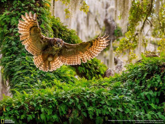 Tròn mắt ảnh thiên nhiên ấn tượng của National Geographic năm 2016 - Ảnh 11.