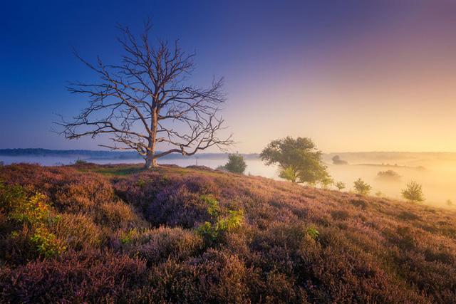 Đắm mình trong buổi sáng mùa Thu đẹp thần tiên ở Hà Lan - Ảnh 8.