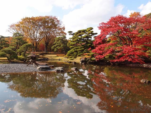 Cảnh sắc mùa thu với lá vàng, lá đỏ đẹp như tranh vẽ ở Tokyo - Ảnh 13.