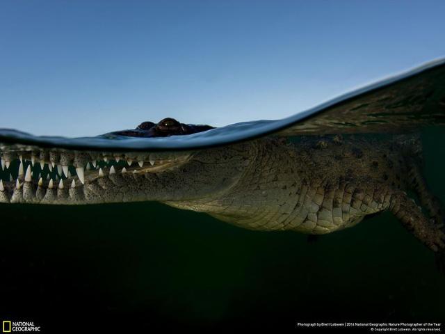 Tròn mắt ảnh thiên nhiên ấn tượng của National Geographic năm 2016 - Ảnh 8.