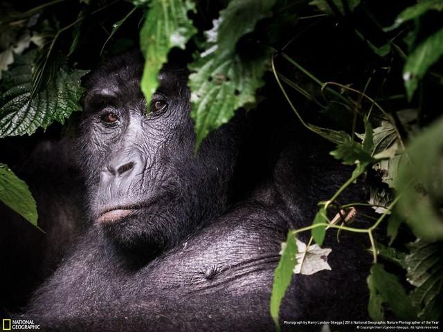 Tròn mắt ảnh thiên nhiên ấn tượng của National Geographic năm 2016 - Ảnh 23.