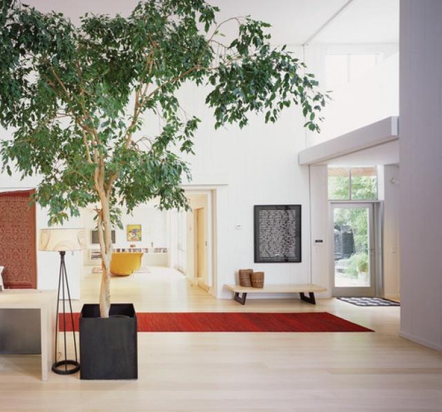 10 loại cây cảnh giúp cho cho không khí nhà bạn hoàn hảo - Ảnh 8.