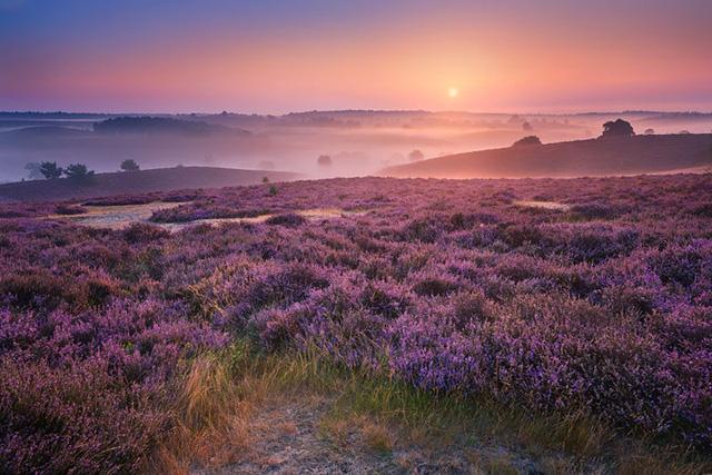 Đắm mình trong buổi sáng mùa Thu đẹp thần tiên ở Hà Lan - Ảnh 9.