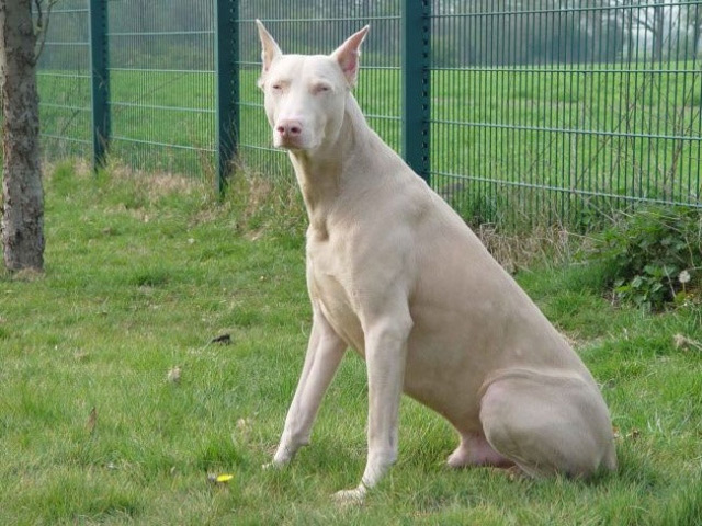 Ngắm những chú chó có bộ lông đặc biệt nhất thế giới - Ảnh 14.