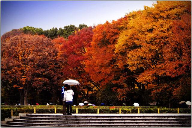 Cảnh sắc mùa thu với lá vàng, lá đỏ đẹp như tranh vẽ ở Tokyo - Ảnh 14.
