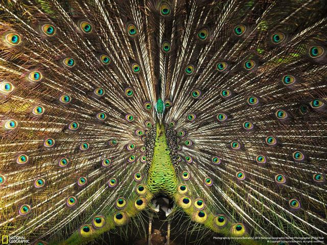 Tròn mắt ảnh thiên nhiên ấn tượng của National Geographic năm 2016 - Ảnh 17.