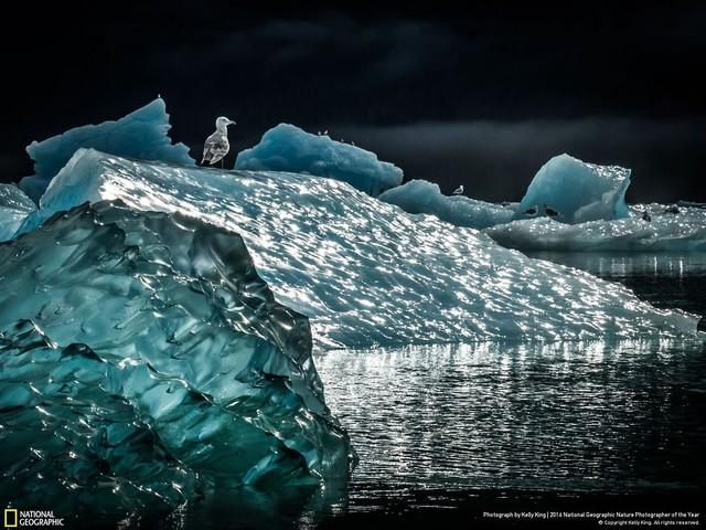 Tròn mắt ảnh thiên nhiên ấn tượng của National Geographic năm 2016 - Ảnh 7.