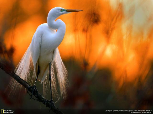 Tròn mắt ảnh thiên nhiên ấn tượng của National Geographic năm 2016 - Ảnh 18.