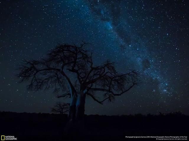 Tròn mắt ảnh thiên nhiên ấn tượng của National Geographic năm 2016 - Ảnh 28.