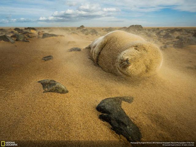 Tròn mắt ảnh thiên nhiên ấn tượng của National Geographic năm 2016 - Ảnh 15.