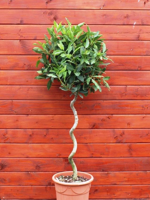10 loại cây cảnh giúp cho cho không khí nhà bạn hoàn hảo - Ảnh 4.