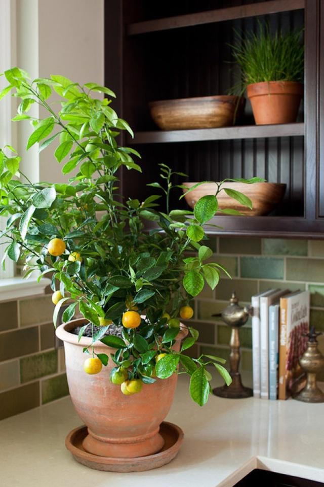 10 loại cây cảnh giúp cho cho không khí nhà bạn hoàn hảo - Ảnh 5.