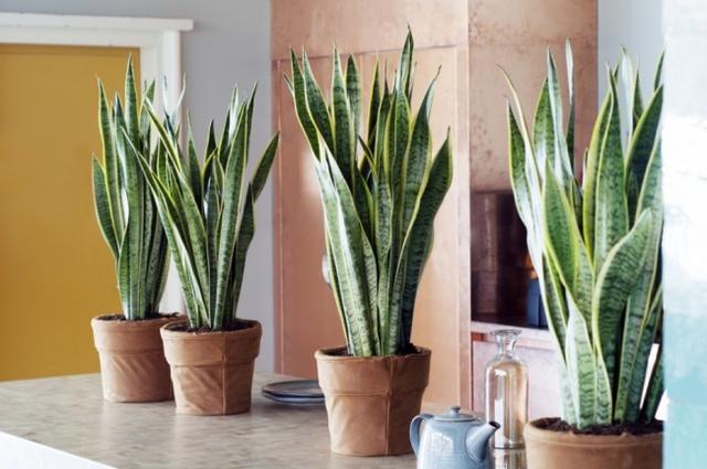 10 loại cây cảnh giúp cho cho không khí nhà bạn hoàn hảo - Ảnh 7.