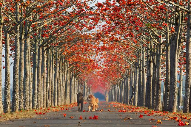Xao xuyến trước những con đường đẹp đầy huyền ảo - Ảnh 7.