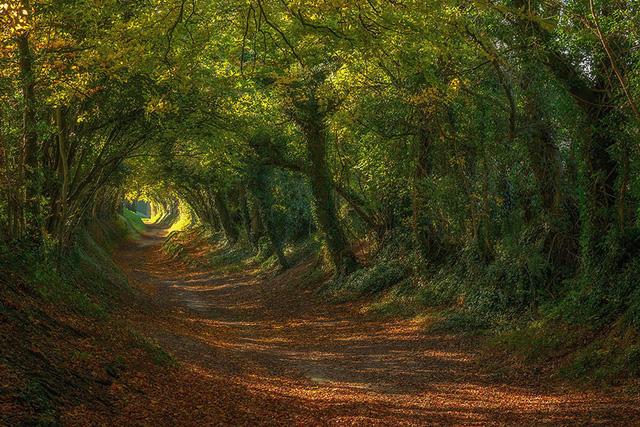 Xao xuyến trước những con đường đẹp đầy huyền ảo - Ảnh 12.