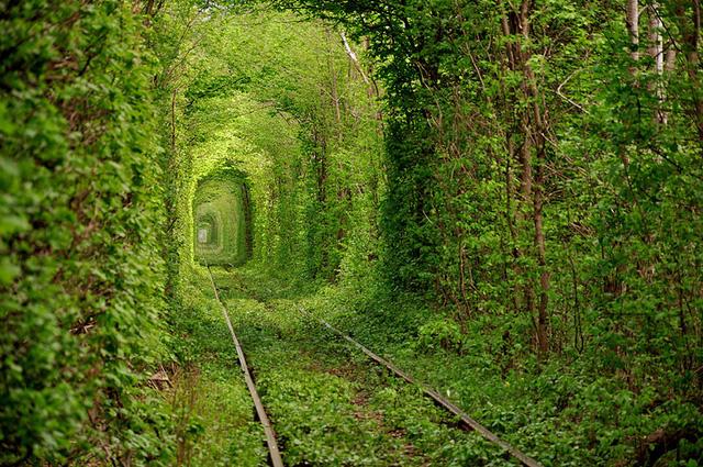 Xao xuyến trước những con đường đẹp đầy huyền ảo - Ảnh 13.