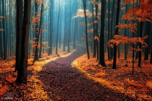 Xao xuyến trước những con đường đẹp đầy huyền ảo - Ảnh 3.