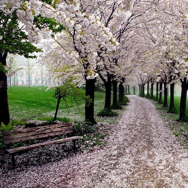 Xao xuyến trước những con đường đẹp đầy huyền ảo - Ảnh 5.