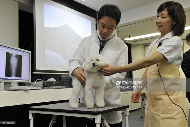 Bệnh viện dành cho thú cưng nở rộ tại Nhật Bản - Ảnh 4.